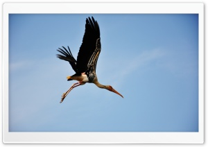 Painted Stork HD Wide Wallpaper for Widescreen