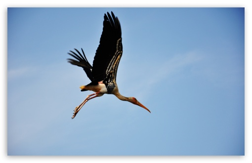 Painted Stork ❤ 4K UHD Wallpaper for Wide 16:10 5:3 Widescreen WHXGA WQXGA WUXGA WXGA WGA ; 4K UHD 16:9 Ultra High Definition 2160p 1440p 1080p 900p 720p ; Standard 4:3 5:4 3:2 Fullscreen UXGA XGA SVGA QSXGA SXGA DVGA HVGA HQVGA ( Apple PowerBook G4 iPhone 4 3G 3GS iPod Touch ) ; Tablet 1:1 ; iPad 1/2/Mini ; Mobile 4:3 5:3 3:2 16:9 5:4 - UXGA XGA SVGA WGA DVGA HVGA HQVGA ( Apple PowerBook G4 iPhone 4 3G 3GS iPod Touch ) 2160p 1440p 1080p 900p 720p QSXGA SXGA ;