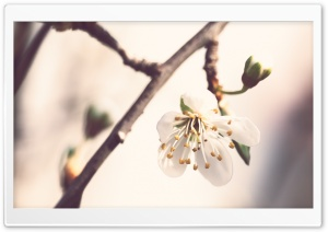 Pale Spring HD Wide Wallpaper for Widescreen