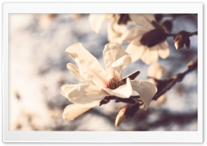 Pale Spring Flowers HD Wide Wallpaper for Widescreen