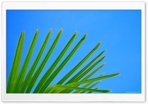 Palm HD Wide Wallpaper for 4K UHD Widescreen desktop & smartphone