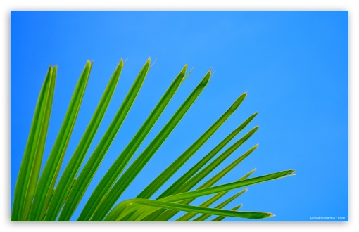 Palm ❤ 4K UHD Wallpaper for Wide 16:10 5:3 Widescreen WHXGA WQXGA WUXGA WXGA WGA ; 4K UHD 16:9 Ultra High Definition 2160p 1440p 1080p 900p 720p ; Standard 4:3 3:2 Fullscreen UXGA XGA SVGA DVGA HVGA HQVGA ( Apple PowerBook G4 iPhone 4 3G 3GS iPod Touch ) ; Tablet 1:1 ; iPad 1/2/Mini ; Mobile 4:3 5:3 3:2 16:9 - UXGA XGA SVGA WGA DVGA HVGA HQVGA ( Apple PowerBook G4 iPhone 4 3G 3GS iPod Touch ) 2160p 1440p 1080p 900p 720p ;