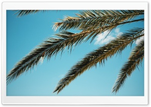 Palm HD Wide Wallpaper for Widescreen