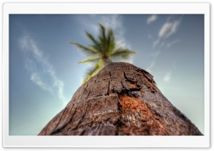 Palm Tree HD Wide Wallpaper for Widescreen