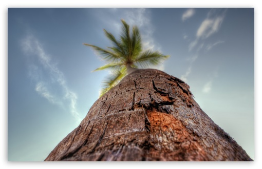 Palm Tree HD wallpaper for Wide 16:10 5:3 Widescreen WHXGA WQXGA WUXGA WXGA WGA ; HD 16:9 High Definition WQHD QWXGA 1080p 900p 720p QHD nHD ; Standard 4:3 5:4 3:2 Fullscreen UXGA XGA SVGA QSXGA SXGA DVGA HVGA HQVGA devices ( Apple PowerBook G4 iPhone 4 3G 3GS iPod Touch ) ; iPad 1/2/Mini ; Mobile 4:3 5:3 3:2 16:9 5:4 - UXGA XGA SVGA WGA DVGA HVGA HQVGA devices ( Apple PowerBook G4 iPhone 4 3G 3GS iPod Touch ) WQHD QWXGA 1080p 900p 720p QHD nHD QSXGA SXGA ;