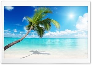 Palm Tree Beach HD Wide Wallpaper for Widescreen