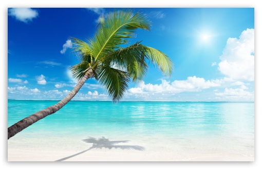Palm Tree Beach HD wallpaper for Wide 16:10 5:3 Widescreen WHXGA WQXGA WUXGA WXGA WGA ; HD 16:9 High Definition WQHD QWXGA 1080p 900p 720p QHD nHD ; UHD 16:9 WQHD QWXGA 1080p 900p 720p QHD nHD ; Standard 4:3 5:4 3:2 Fullscreen UXGA XGA SVGA QSXGA SXGA DVGA HVGA HQVGA devices ( Apple PowerBook G4 iPhone 4 3G 3GS iPod Touch ) ; Tablet 1:1 ; iPad 1/2/Mini ; Mobile 4:3 5:3 3:2 16:9 5:4 - UXGA XGA SVGA WGA DVGA HVGA HQVGA devices ( Apple PowerBook G4 iPhone 4 3G 3GS iPod Touch ) WQHD QWXGA 1080p 900p 720p QHD nHD QSXGA SXGA ;