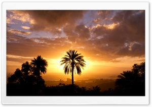 Palm Tree In Sunset Light HD Wide Wallpaper for 4K UHD Widescreen desktop & smartphone