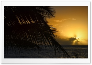 Palm Tree Leaf, Sunset, Florida