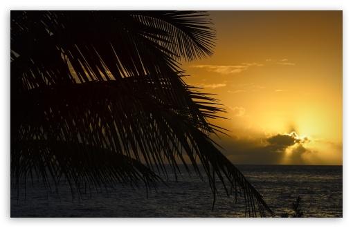 Palm Tree Leaf, Sunset, Florida ❤ 4K UHD Wallpaper for Wide 16:10 5:3 Widescreen WHXGA WQXGA WUXGA WXGA WGA ; 4K UHD 16:9 Ultra High Definition 2160p 1440p 1080p 900p 720p ; UHD 16:9 2160p 1440p 1080p 900p 720p ; Standard 4:3 5:4 3:2 Fullscreen UXGA XGA SVGA QSXGA SXGA DVGA HVGA HQVGA ( Apple PowerBook G4 iPhone 4 3G 3GS iPod Touch ) ; Tablet 1:1 ; iPad 1/2/Mini ; Mobile 4:3 5:3 3:2 16:9 5:4 - UXGA XGA SVGA WGA DVGA HVGA HQVGA ( Apple PowerBook G4 iPhone 4 3G 3GS iPod Touch ) 2160p 1440p 1080p 900p 720p QSXGA SXGA ;