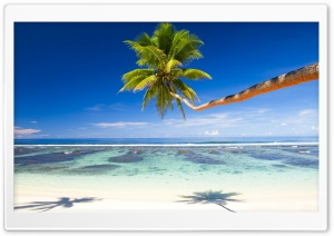 Palm Tree Over Tropical Beach HD Wide Wallpaper for Widescreen