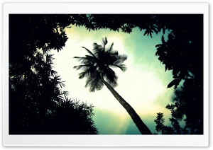 Palm Tree Top HD Wide Wallpaper for Widescreen