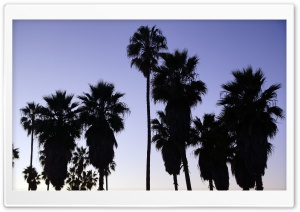 Palm Trees   Venice Beach, Los Angeles HD Wide Wallpaper for Widescreen