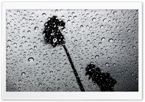 Palm Trees In The Rain Through The Skylight HD Wide Wallpaper for Widescreen