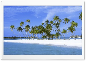 Palm Trees On Island, Maldives, Indian Ocean HD Wide Wallpaper for Widescreen