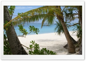 Palm Trees On The Beach HD Wide Wallpaper for Widescreen