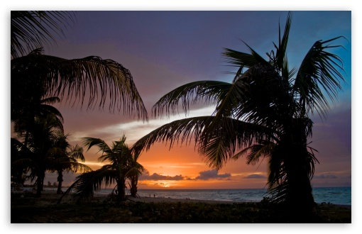 Palm Trees On The Beach Sunset Ultra Hd Desktop Background Wallpaper For 4k Uhd Tv Multi Display Dual Monitor Tablet Smartphone