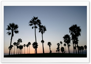 Palm Trees Silhouette HD Wide Wallpaper for Widescreen