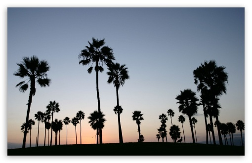 Palm Trees Silhouette HD wallpaper for Wide 16:10 5:3 Widescreen WHXGA WQXGA WUXGA WXGA WGA ; HD 16:9 High Definition WQHD QWXGA 1080p 900p 720p QHD nHD ; Standard 3:2 Fullscreen DVGA HVGA HQVGA devices ( Apple PowerBook G4 iPhone 4 3G 3GS iPod Touch ) ; Tablet 1:1 ; iPad 1/2/Mini ; Mobile 4:3 5:3 3:2 16:9 - UXGA XGA SVGA WGA DVGA HVGA HQVGA devices ( Apple PowerBook G4 iPhone 4 3G 3GS iPod Touch ) WQHD QWXGA 1080p 900p 720p QHD nHD ;