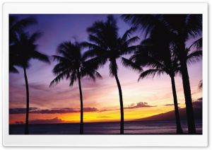Palm Trees, Sunset HD Wide Wallpaper for Widescreen