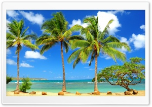 Palms HD Wide Wallpaper for Widescreen