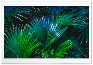 Palms in Blues Ultra HD Wallpaper for 4K UHD Widescreen desktop, tablet & smartphone