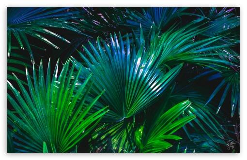 Download Palms in Blues UltraHD Wallpaper