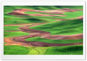 Palouse Hills From Steptoe Butte Washington HD Wide Wallpaper for 4K UHD Widescreen desktop & smartphone