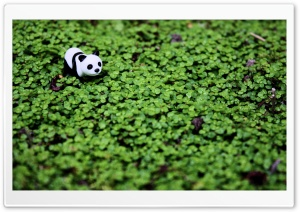 Panda HD Wide Wallpaper for 4K UHD Widescreen desktop & smartphone
