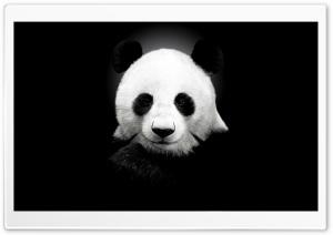 Panda Bear Ultra HD Wallpaper for 4K UHD Widescreen desktop, tablet & smartphone