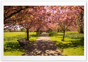 Park Alley Springtime HD Wide Wallpaper for 4K UHD Widescreen desktop & smartphone