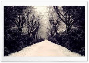 Park Alley, Winter HD Wide Wallpaper for Widescreen