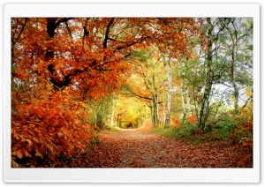 Park Fall HD Wide Wallpaper for Widescreen