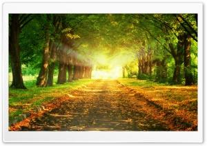 Park Road Ultra HD Wallpaper for 4K UHD Widescreen desktop, tablet & smartphone