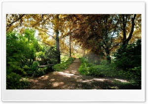 park skamya derevya HD Wide Wallpaper for 4K UHD Widescreen desktop & smartphone