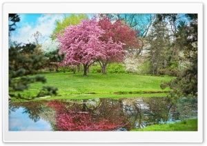 Park, Spring HD Wide Wallpaper for Widescreen