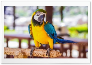 Parrot Ultra HD Wallpaper for 4K UHD Widescreen desktop, tablet & smartphone