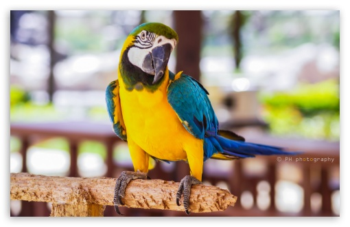 Parrot ❤ 4K UHD Wallpaper for Wide 16:10 5:3 Widescreen WHXGA WQXGA WUXGA WXGA WGA ; 4K UHD 16:9 Ultra High Definition 2160p 1440p 1080p 900p 720p ; UHD 16:9 2160p 1440p 1080p 900p 720p ; Standard 4:3 5:4 3:2 Fullscreen UXGA XGA SVGA QSXGA SXGA DVGA HVGA HQVGA ( Apple PowerBook G4 iPhone 4 3G 3GS iPod Touch ) ; Smartphone 16:9 3:2 5:3 2160p 1440p 1080p 900p 720p DVGA HVGA HQVGA ( Apple PowerBook G4 iPhone 4 3G 3GS iPod Touch ) WGA ; Tablet 1:1 ; iPad 1/2/Mini ; Mobile 4:3 5:3 3:2 16:9 5:4 - UXGA XGA SVGA WGA DVGA HVGA HQVGA ( Apple PowerBook G4 iPhone 4 3G 3GS iPod Touch ) 2160p 1440p 1080p 900p 720p QSXGA SXGA ;