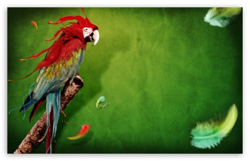 Parrot HD wallpaper for Wide 16:10 5:3 Widescreen WHXGA WQXGA WUXGA WXGA WGA ; HD 16:9 High Definition WQHD QWXGA 1080p 900p 720p QHD nHD ; Standard 4:3 5:4 Fullscreen UXGA XGA SVGA QSXGA SXGA ; MS 3:2 DVGA HVGA HQVGA devices ( Apple PowerBook G4 iPhone 4 3G 3GS iPod Touch ) ; Mobile VGA WVGA iPhone iPad PSP Phone - VGA QVGA Smartphone ( PocketPC GPS iPod Zune BlackBerry HTC Samsung LG Nokia Eten Asus ) WVGA WQVGA Smartphone ( HTC Samsung Sony Ericsson LG Vertu MIO ) HVGA Smartphone ( Apple iPhone iPod BlackBerry HTC Samsung Nokia ) Sony PSP Zune HD Zen ; Tablet 1&2 Android ;