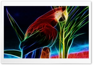 Parrot HD Wide Wallpaper for Widescreen