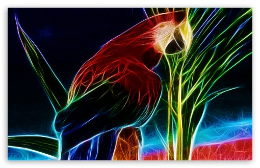 Parrot HD wallpaper for Wide 16:10 5:3 Widescreen WHXGA WQXGA WUXGA WXGA WGA ; HD 16:9 High Definition WQHD QWXGA 1080p 900p 720p QHD nHD ; Standard 4:3 5:4 3:2 Fullscreen UXGA XGA SVGA QSXGA SXGA DVGA HVGA HQVGA devices ( Apple PowerBook G4 iPhone 4 3G 3GS iPod Touch ) ; Tablet 1:1 ; iPad 1/2/Mini ; Mobile 4:3 5:3 3:2 16:9 5:4 - UXGA XGA SVGA WGA DVGA HVGA HQVGA devices ( Apple PowerBook G4 iPhone 4 3G 3GS iPod Touch ) WQHD QWXGA 1080p 900p 720p QHD nHD QSXGA SXGA ;