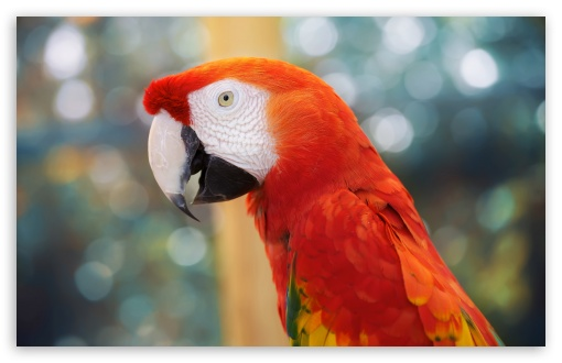 Parrot ❤ 4K UHD Wallpaper for Wide 16:10 5:3 Widescreen WHXGA WQXGA WUXGA WXGA WGA ; 4K UHD 16:9 Ultra High Definition 2160p 1440p 1080p 900p 720p ; UHD 16:9 2160p 1440p 1080p 900p 720p ; Standard 4:3 5:4 3:2 Fullscreen UXGA XGA SVGA QSXGA SXGA DVGA HVGA HQVGA ( Apple PowerBook G4 iPhone 4 3G 3GS iPod Touch ) ; Tablet 1:1 ; iPad 1/2/Mini ; Mobile 4:3 5:3 3:2 16:9 5:4 - UXGA XGA SVGA WGA DVGA HVGA HQVGA ( Apple PowerBook G4 iPhone 4 3G 3GS iPod Touch ) 2160p 1440p 1080p 900p 720p QSXGA SXGA ;