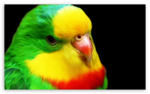 Parrot ❤ 4K UHD Wallpaper for Wide 5:3 Widescreen WGA ; 4K UHD 16:9 Ultra High Definition 2160p 1440p 1080p 900p 720p ; Standard 4:3 Fullscreen UXGA XGA SVGA ; iPad 1/2/Mini ; Mobile 4:3 5:3 16:9 - UXGA XGA SVGA WGA 2160p 1440p 1080p 900p 720p ;