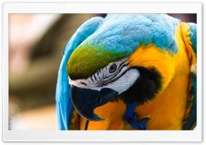 Parrot Ara Ararauna HD Wide Wallpaper for 4K UHD Widescreen desktop & smartphone