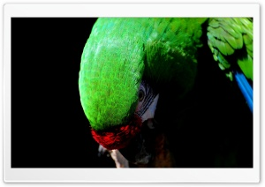 Parrot Bird HD Wide Wallpaper for Widescreen