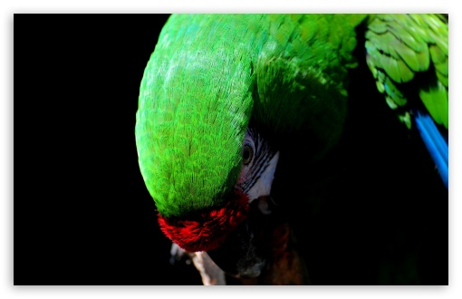 Parrot Bird ❤ 4K UHD Wallpaper for Wide 16:10 5:3 Widescreen WHXGA WQXGA WUXGA WXGA WGA ; 4K UHD 16:9 Ultra High Definition 2160p 1440p 1080p 900p 720p ; Standard 4:3 5:4 3:2 Fullscreen UXGA XGA SVGA QSXGA SXGA DVGA HVGA HQVGA ( Apple PowerBook G4 iPhone 4 3G 3GS iPod Touch ) ; iPad 1/2/Mini ; Mobile 4:3 5:3 3:2 16:9 5:4 - UXGA XGA SVGA WGA DVGA HVGA HQVGA ( Apple PowerBook G4 iPhone 4 3G 3GS iPod Touch ) 2160p 1440p 1080p 900p 720p QSXGA SXGA ;