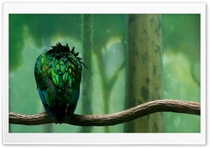 Parrot On A Branch HD Wide Wallpaper for 4K UHD Widescreen desktop & smartphone