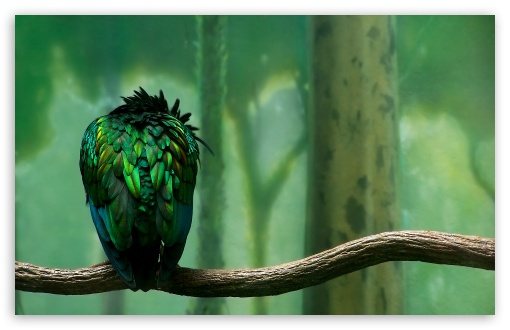 Parrot On A Branch UltraHD Wallpaper for Wide 16:10 5:3 Widescreen WHXGA WQXGA WUXGA WXGA WGA ; Standard 4:3 3:2 Fullscreen UXGA XGA SVGA DVGA HVGA HQVGA ( Apple PowerBook G4 iPhone 4 3G 3GS iPod Touch ) ; Tablet 1:1 ; iPad 1/2/Mini ; Mobile 4:3 5:3 3:2 16:9 5:4 - UXGA XGA SVGA WGA DVGA HVGA HQVGA ( Apple PowerBook G4 iPhone 4 3G 3GS iPod Touch ) 2160p 1440p 1080p 900p 720p QSXGA SXGA ;