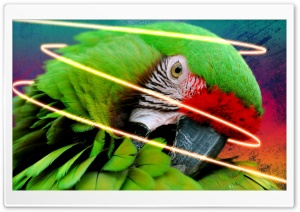 Parrot With Ink Splats And Neon Glow Line - Final HD Wide Wallpaper for Widescreen