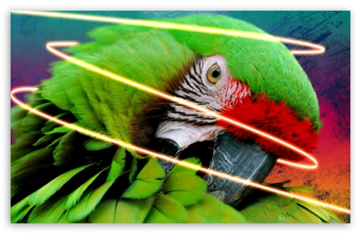 Parrot With Ink Splats And Neon Glow Line - Final HD wallpaper for Wide 16:10 5:3 Widescreen WHXGA WQXGA WUXGA WXGA WGA ; HD 16:9 High Definition WQHD QWXGA 1080p 900p 720p QHD nHD ; Standard 4:3 3:2 Fullscreen UXGA XGA SVGA DVGA HVGA HQVGA devices ( Apple PowerBook G4 iPhone 4 3G 3GS iPod Touch ) ; iPad 1/2/Mini ; Mobile 4:3 5:3 3:2 16:9 - UXGA XGA SVGA WGA DVGA HVGA HQVGA devices ( Apple PowerBook G4 iPhone 4 3G 3GS iPod Touch ) WQHD QWXGA 1080p 900p 720p QHD nHD ;